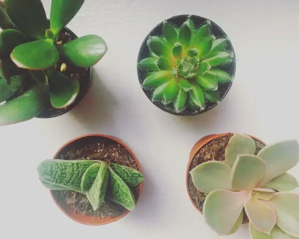Taking care of plants around the house or in your garden makes you feel productive, responsible, and downright proud of your lil' guys. Watching your plants grow and thrive is seriously one of the most satisfying experiences.I know, I know, you can't keep anything alive. Try some of these beginner houseplants if you murder everything you touch.